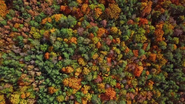 Flight Over Autumn Forest