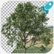 Tree In Wind - VideoHive Item for Sale