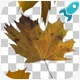 Autumn Leaves Transitions - VideoHive Item for Sale