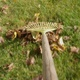 Raking Leaves On A Green Lawn In The Garden At Fall A Pov Shot On Red Camera - VideoHive Item for Sale