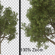 Big Breezy Tree - Alpha Channel - VideoHive Item for Sale