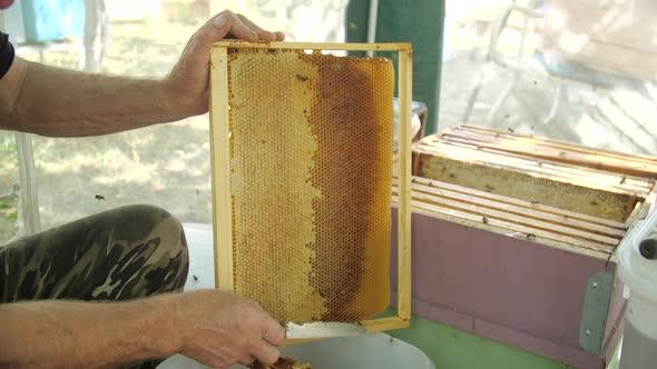 Honey Production Concept