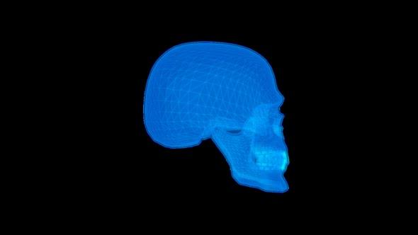 Skull Motion Graphics